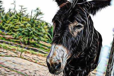 Donkey Mixed Media - Hi by Marvin Blaine