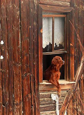 Photograph - Home Alone by Kobby Dagan