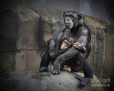Chimpanzee Photograph - Hugs by Jamie Pham