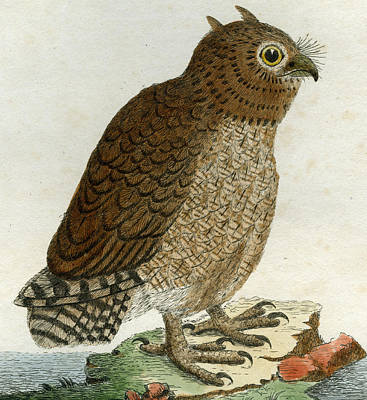 Owl Drawing - Hutum Owl by John Latham