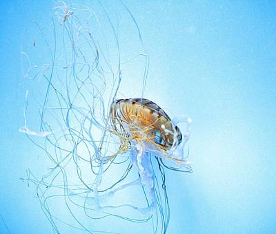 Sea Creatures Photograph - Jellyfish  by Marianna Mills
