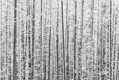 Kananaskis Country Winter Snow Canadian Rockies Print by Binh Ly
