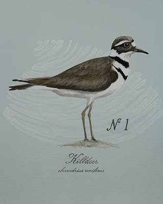 Killdeer Painting - Killdeer by Amy Reader