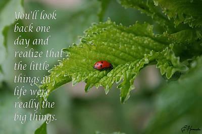 Beetle Painting - Ladybug by Ellen Henneke