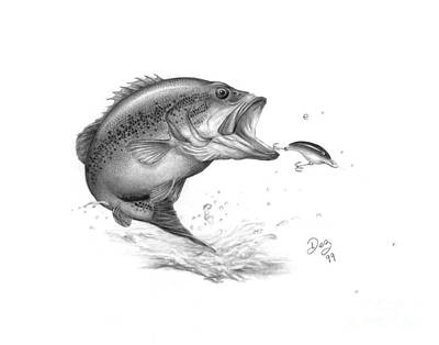 Bass Fishing Drawing - Large Mouth Bass by Larry-DEZ- Dismang