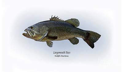 Bass Fishing Drawing - Largemouth Bass by Ralph Martens
