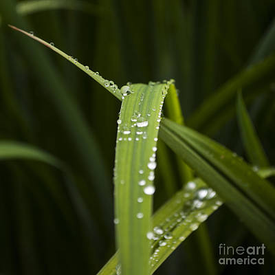 Outdoor Photograph - Leaf With Water Drops - Sq by Mandy Judson
