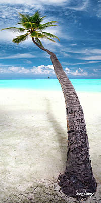 Leaning Photograph - Leaning Palm by Sean Davey