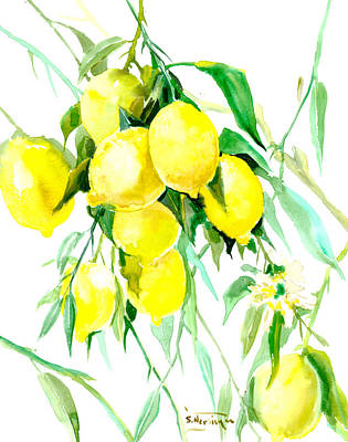 Lime Drawing - Lemon Tree by Suren Nersisyan