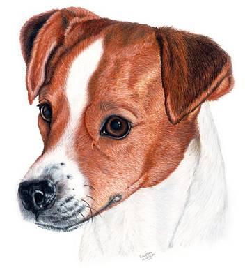 Dog Drawing - Lewie by Kristen Wesch