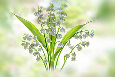 Lily Of The Valley Print by Jacky Parker