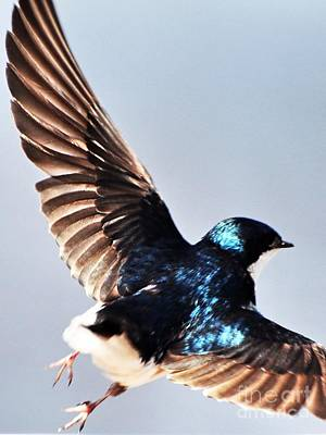 Swallow Photograph - Little Feet by MingTa Li