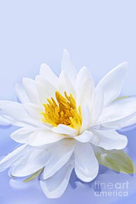 Lotus Flower Print by Elena Elisseeva