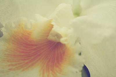 Flower Photograph - Lovely Feeling by The Art Of Marilyn Ridoutt-Greene