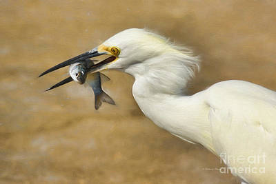 Fly Fisherman Painting - Lunch Is Served by Deborah Benoit