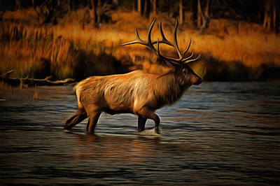 Yellowstone National Park Digital Art - Madison Bull by Mark Kiver