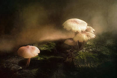 Stump Photograph - Magic Mushrooms by Scott Norris