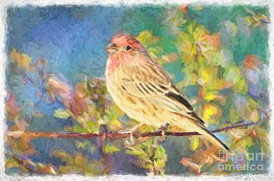 Male Housefinch - Digital Paint Print by Debbie Portwood