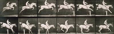 Dressage Photograph - Man And Horse Jumping A Fence by Eadweard Muybridge