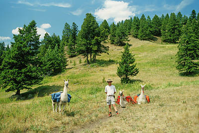 Llama Photograph - Man Posing With Llamas In A Beautiful Grassy Meadow by Jerry Voss