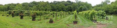 Maryland Photograph - Maryland Vineyard Panorama by Thomas Marchessault