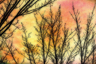 Memory Of Trees Print by Bob Orsillo