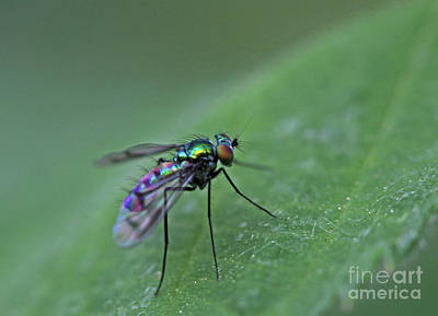 Photograph - Metallic Fly by Gary Wing