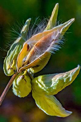 Flora Photograph - Milkweed 4 by Steve Harrington