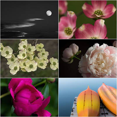 Zinnias Photograph - Moments In Time  by Don Spenner