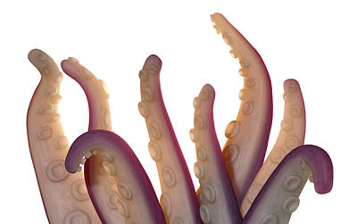 Monster Tentacles Isolated Print by Allan Swart