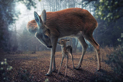 Mother And Fawn Print by John Wilhelm