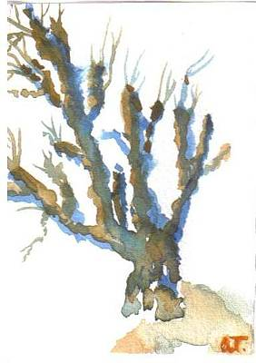 Watercolor Painting - Mt. Airy Sycamore 2 by Warren Thompson