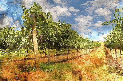 Wine Photograph - Napa Vineyard In The Spring by Brandon Bourdages