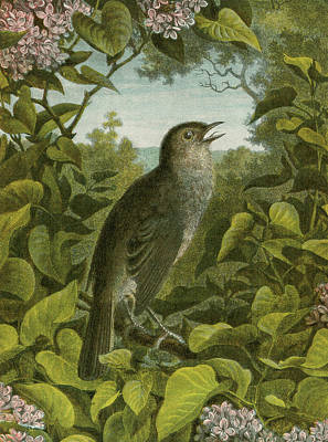 Chirp Painting - Nightingale by English School