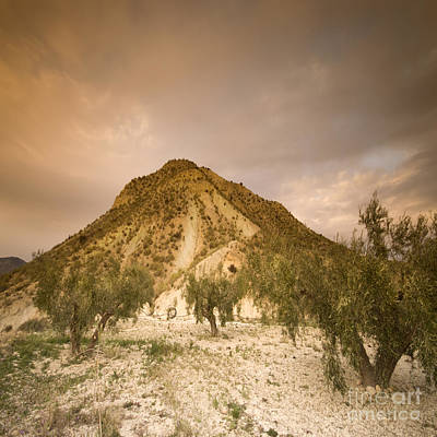Spanish Landscape Photograph - Olive Trees In Spain by Angel  Tarantella