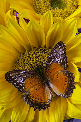 Butterfly Photograph - Orange Butterfly On Sunflower by Garry Gay