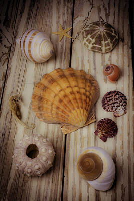 Orange Sea Shell Print by Garry Gay