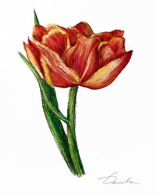 Orange Tulip Print by Danuta Bennett