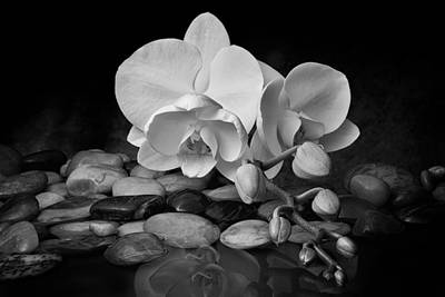 Pebble Photograph - Orchid - Sensuous Virtue by Tom Mc Nemar