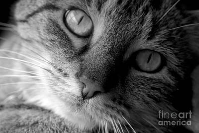 Black_white Photograph - Oscar by Cathy Fitzgerald