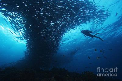 Palau, Diving Print by Dave Fleetham - Printscapes