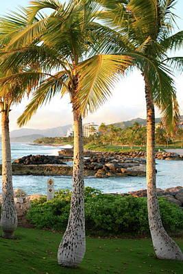 Ko Olina Lagoon Photograph - Palm Trees 2 by Eddie Freeman