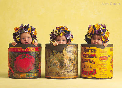 Flowers Photograph - Pansies by Anne Geddes
