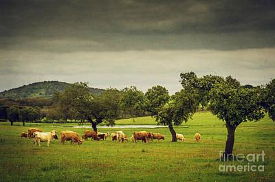 Pasturing Cows Print by Carlos Caetano
