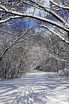 Pass Photograph - Path In Winter Forest by Elena Elisseeva