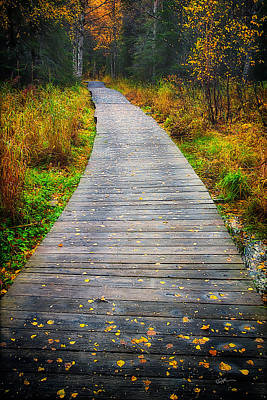 Nature Center Photograph - Pathway Home by Ed Boudreau