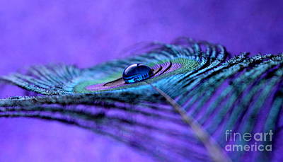 Peacock Photograph - Peace Within by Krissy Katsimbras