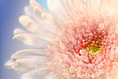 Pink Daisy  Print by Sandra Cunningham