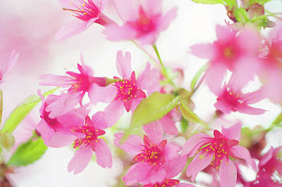 Photograph - Pink Delight by Jenny Rainbow