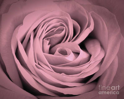 Pink Photograph - Pink Rose Close-up Background. Romantic Love Greeting Card by Michal Bednarek